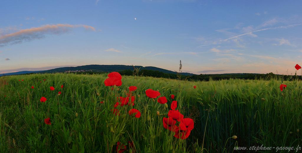 Entre Saône et Mamirolle - Franche Comté